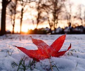 snow, christmas, and leaves image