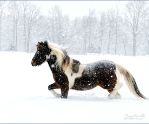 horse, nature, and winter image