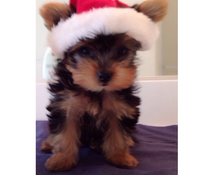 baby, love her, and yorkie image