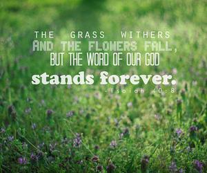 god, bible, and grass image