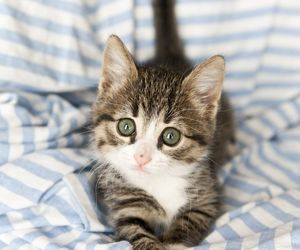 animal, kitten, and photography image
