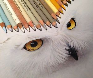 drawing, owl, and art image