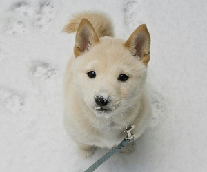 cute and winter snow dog cold image
