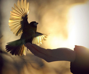 bird, light, and nice image