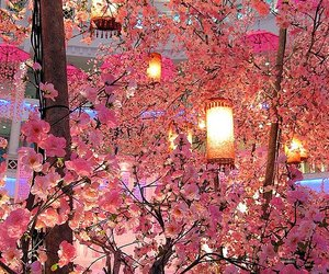 pink, flowers, and light image