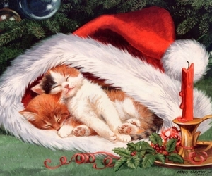 cats, december, and holiday image