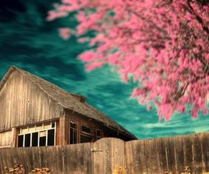 barn, beauty, and blossom image