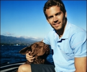 paul walker and dog image
