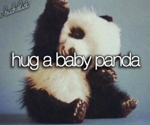panda, hug, and cute image