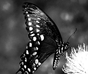 art and butterfly image