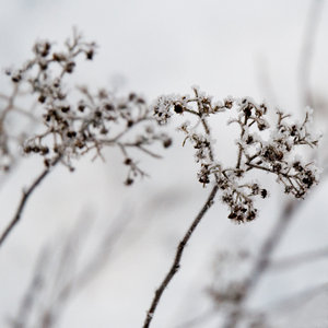 frost, plant, and white image