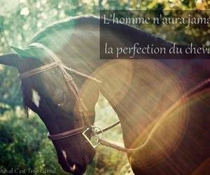 chevaux, equitation, and horse image