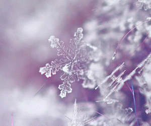 cold, photography, and winter image