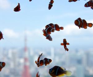 fish, nemo, and water image