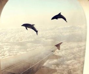dolphin, sky, and clouds image