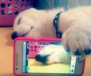 dog, selfie, and photo image