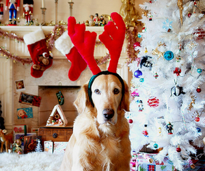 dog, adorable, and christmas image