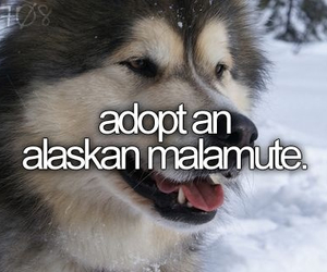 before i die, animal, and dog image