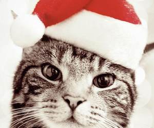christimas, kitten, and red image