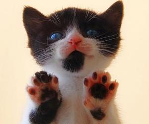 animals, meow, and paws image