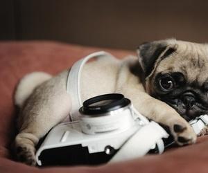 dog, cute, and camera image