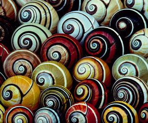 shells and snail image