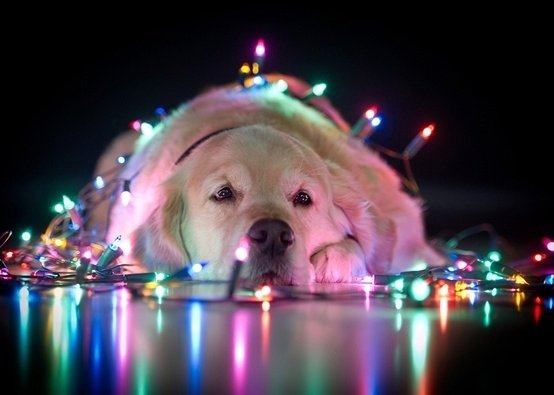image about dog in christmasfeeling by gabriella
