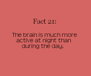 brain, fact, and off image