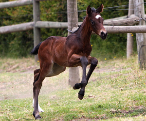 free, horse, and prance image