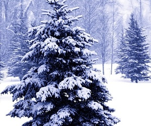 winter, christmas, and nature image