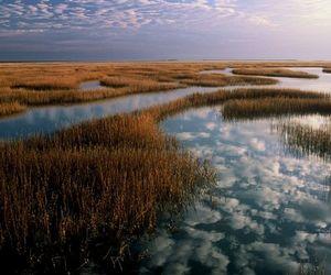 marshland at sunset image