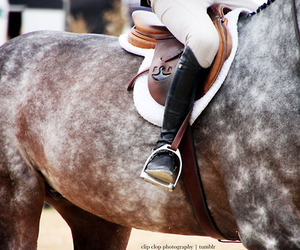 equestrian, horse, and dapple image