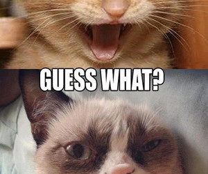 funny, grumpy cat, and christmas image