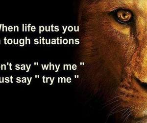 life, quote, and lion image