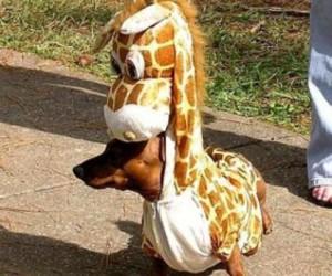 dog, giraffe, and animal image