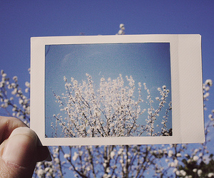 photography, flowers, and tree image