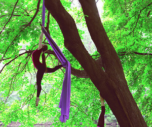 nature and aerial silks image