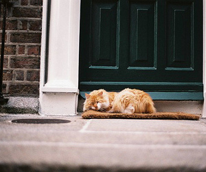 cat, vintage, and house image