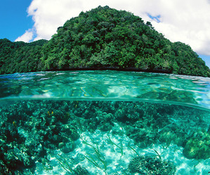coral, paradise, and flower image