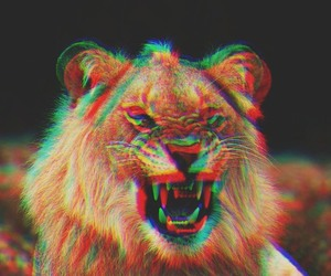 lion, hipster, and triangle image