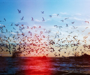 birds, blue, and camp image