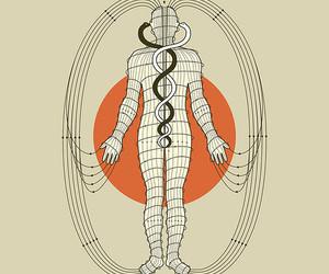 anatomy, circulation, and design image