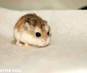 hamster, sweet, and djur image
