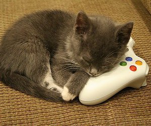 cute, cat, and xbox image