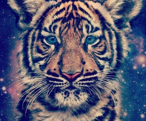 tiger, animal, and wild image
