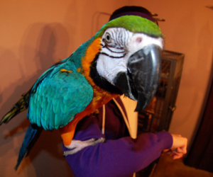bird, macaw, and parrot image