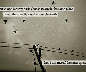 birds and question image
