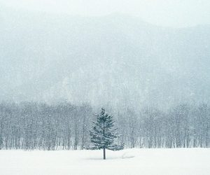 snow, christmas, and forest image