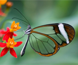 butterfly, pretty, and red image