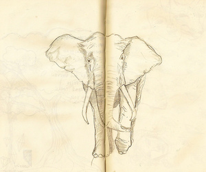 animal, book, and draw image